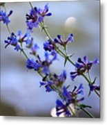 Blue Wildflowers Over Rimrock Lake Metal Print