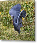 Blue Wings And Green Pond Metal Print