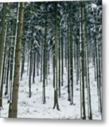 Blue Winter Forest Metal Print