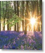 Bluebell Dawn Metal Print