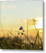 Bluebell In The Sunrise Metal Print