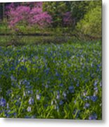 Bluebells And Redbuds Metal Print
