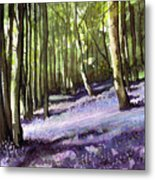 Bluebells At Grimescar Wood Metal Print