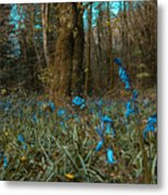 Bluebells In Lismore Forest Metal Print