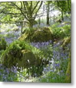 Bluebells On Dartmoor Metal Print