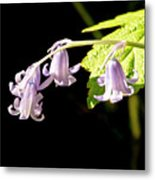 Bluebells Under The Sun Ray. Metal Print