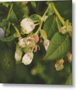 Blueberry Bush Metal Print