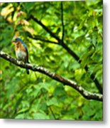Bluebird Looking About Metal Print