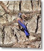 Bluebird On Canary Island Palm II Metal Print