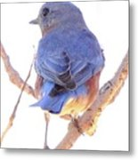 Bluebird On White Metal Print