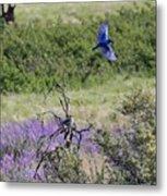 Bluebird Pair In Blickleton Metal Print