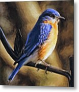 Bluebird Portrait Metal Print