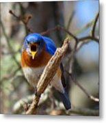 Bluebird Temper Metal Print