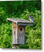 Bluebird With Grub Metal Print
