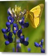Bluebonnet And Butterfly Metal Print