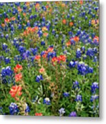Bluebonnets And Paintbrushes 3 - Texas Metal Print