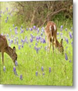 Bluebonnets And Whitetails Metal Print