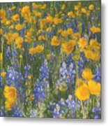 Bluebonnets And Wildflowers Metal Print