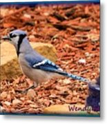 Bluejay Profile Metal Print