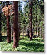 Bluff Lake Ca Fern Forest 2 Metal Print