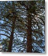 Bluff Lake Ca Through The Trees 3 Metal Print