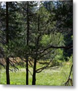Bluff Lake Ca Through The Trees 8 Metal Print