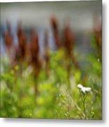 Bluff Lake Ca Wild Flowers 1 Metal Print