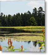 Bluff Lake Ca Wild Flowers 12 Metal Print