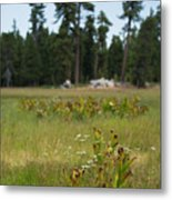 Bluff Lake Ca Wild Flowers 4 Metal Print