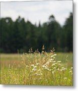 Bluff Lake Ca Wild Flowers 5 Metal Print