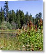 Bluff Lake Foliage 4 Metal Print