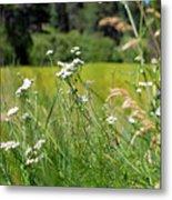 Bluff Lake Wild Flowers 1 Metal Print