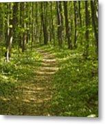 Bluff Trail Awenda Provincial Park Metal Print