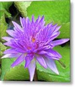 Blumen Des Wassers - Flowers Of The Water 17 Metal Print