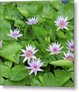 Blumen Des Wassers - Flowers Of The Water 22 Metal Print