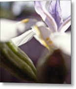 Blurred Iris Metal Print by Ray Laskowitz - Printscapes