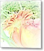 Blush Gerber And Rose Metal Print