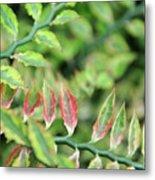 Blushing Leaves Metal Print