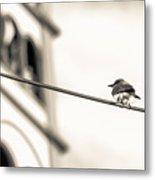 Bnw Bird - San Salvador I Metal Print