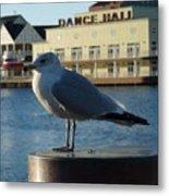 Boardwalk Seagull Metal Print