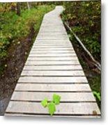 Boardwalk To Backguard Falls In British Columbia Metal Print