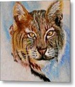 Bob Cat Metal Print by Jean Ann Curry Hess
