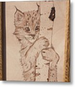 Bobcat Kitten Curiosity Metal Print