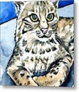 Bobcat Portrait Metal Print