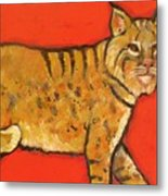 Bobcat Watching Metal Print by Carol Suzanne Niebuhr