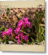 Bog Laurel Flowers Metal Print