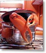 Boiled Crab Metal Print