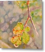Bokeh - Sunlight On Brambles And Cobwebs Metal Print