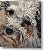 Bolognese Breed Metal Print
