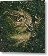 Bone Feather And Green Metal Print